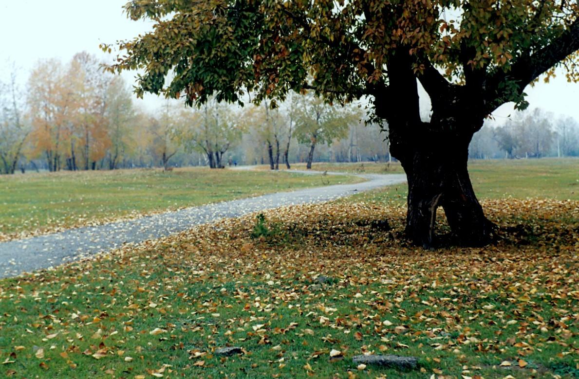 Абакан  Осень  благодатная пора для увеличения зелёных